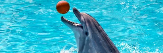 dolphin playing ball