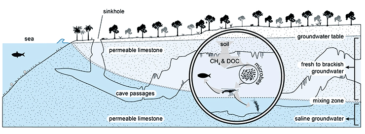 cave-adapted methane microbe fig2