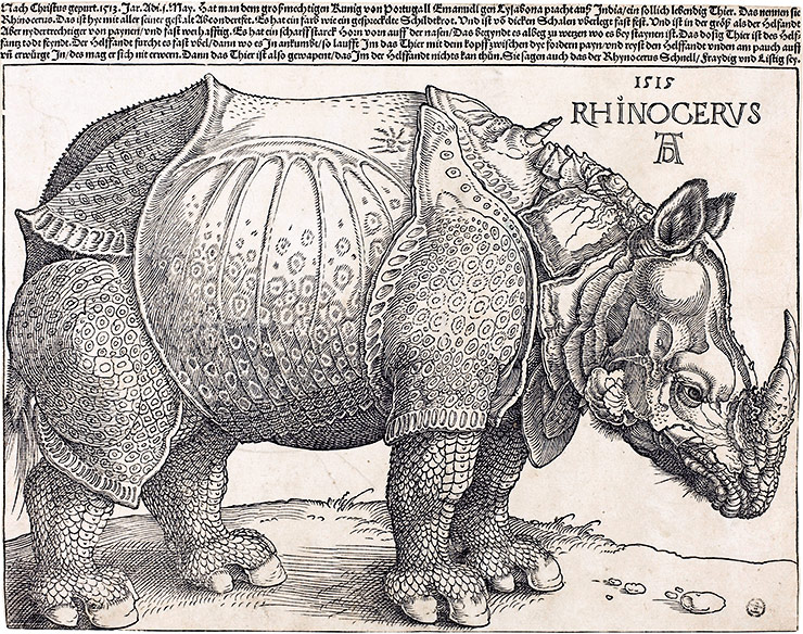 Albrecht Dürer's The Rhinoceros