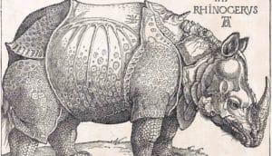 Albrecht Dürer's The Rhinoceros