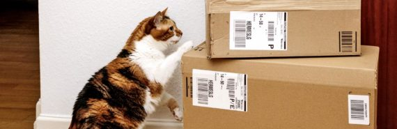 cat inspects Amazon Key packages