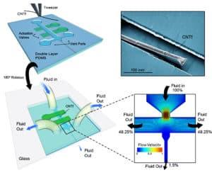 Delivering carbon nanotube fiber into agarose