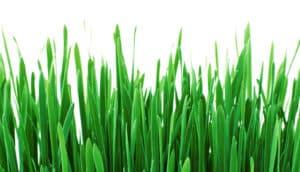 grass against white