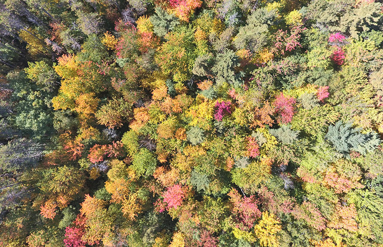 overhead image of Harvard Forest