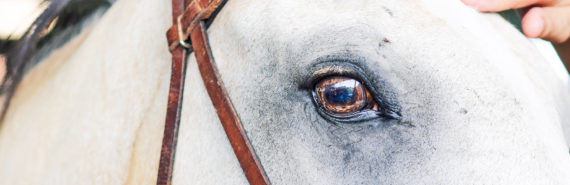 eye of horse in bridle