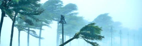 hurricane winds bend palm trees