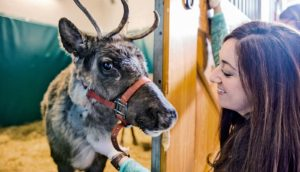 Little Buddy the reindeer with vet