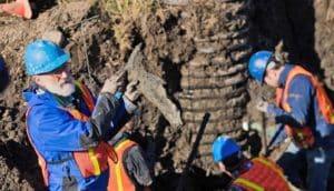 paleontologist holds up muddy mammoth shoulder blade