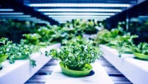 plants in indoor farm (artificial photosynthesis concept - ethylene)