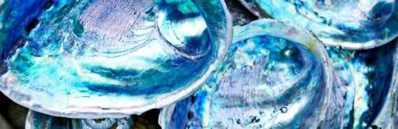 shells (natural materials)