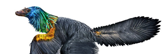 Caihong juji dinosaur (rainbow)