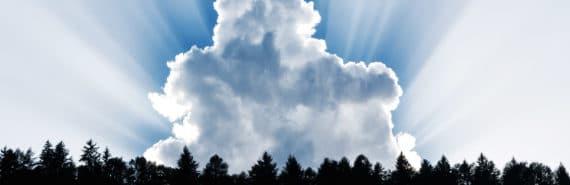 cloud behind trees