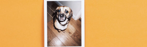 dog polaroid on orange #memoriesindna