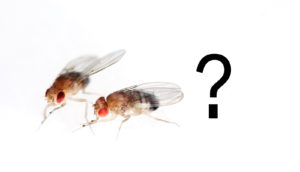 two fruit flies and a question mark