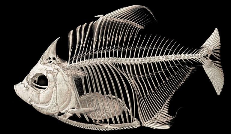 piranha scan