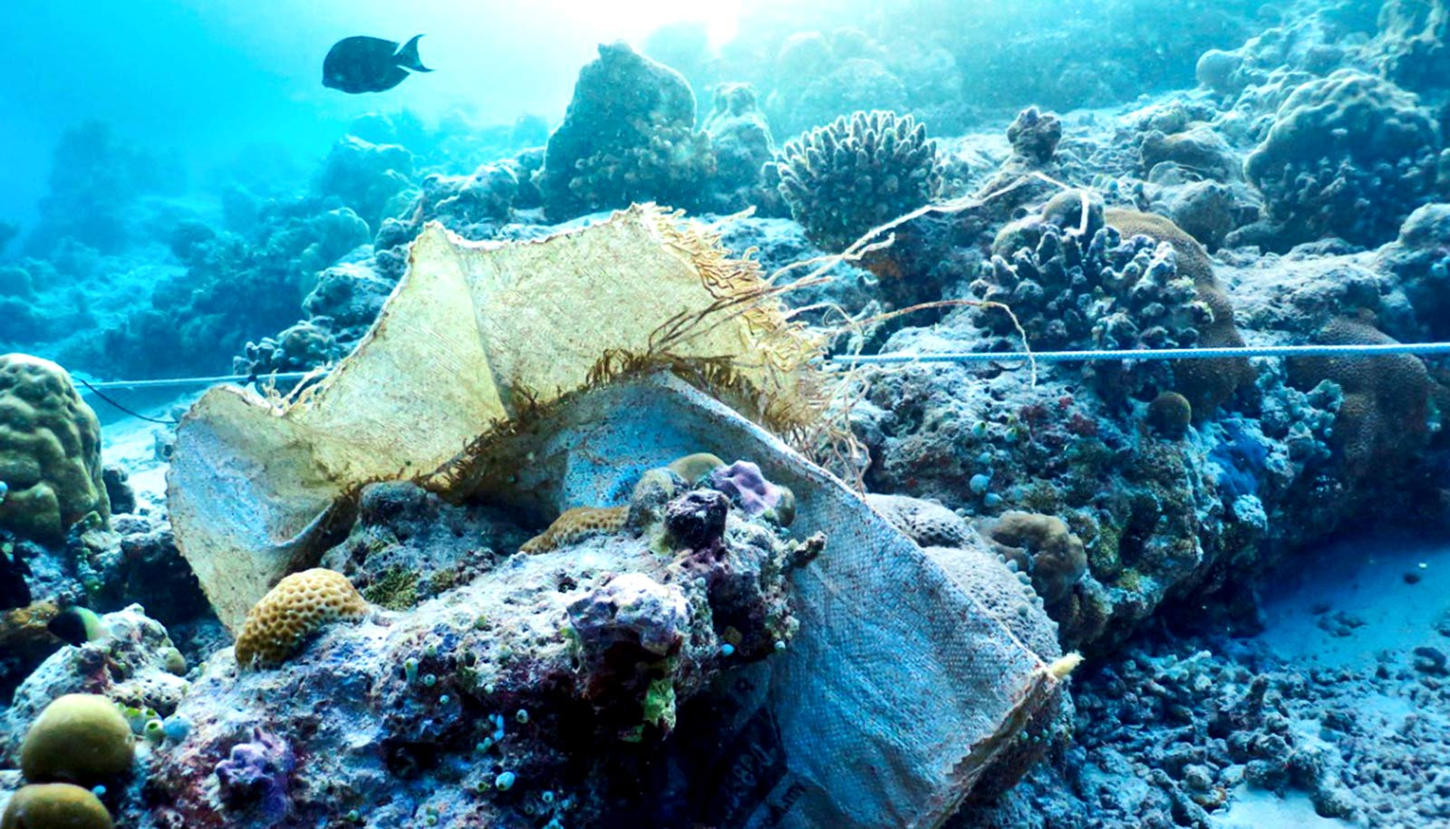 Watch: Plastic trash makes diseases worse for corals ...