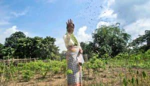 farmer spreading fertilizer