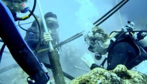 Galápagos Islands researchers diving