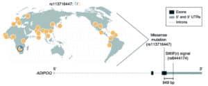 genome data map