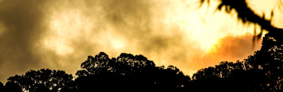volcano smoke over trees