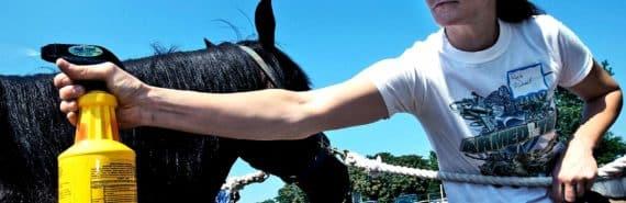 veteran horse riding
