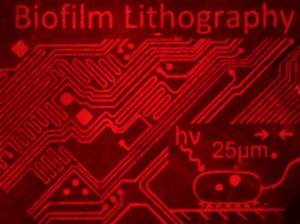 Biofilm lithography image