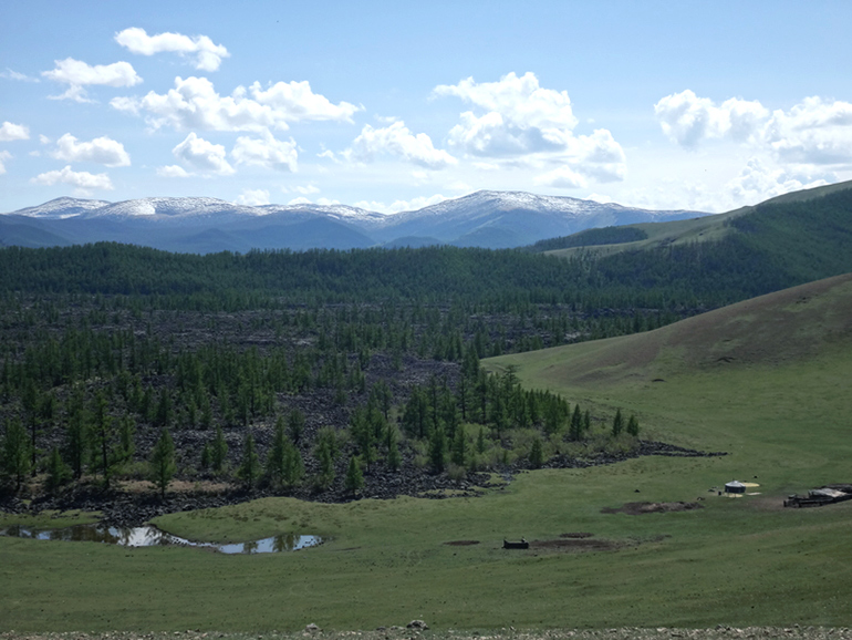 Siberian pine forest (droughts in Mongolia)