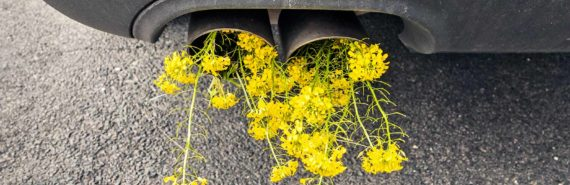 flowers in car exhaust (cutting emissions concept)