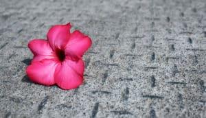flower on rusty metal (nanoflowers concept)