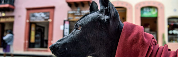 Mexican hairless dog -- Maya dogs