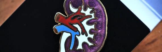 kidney pin (kidney transplants concept)