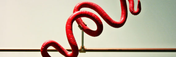 red roundworm model