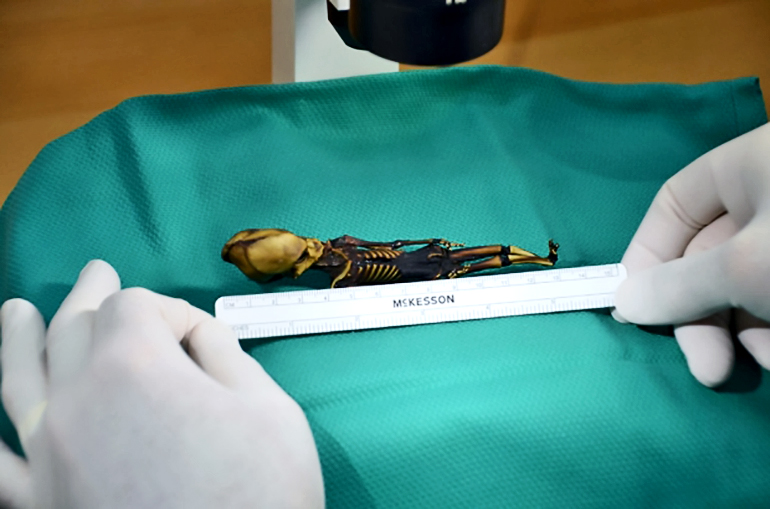 measuring tiny skeleton