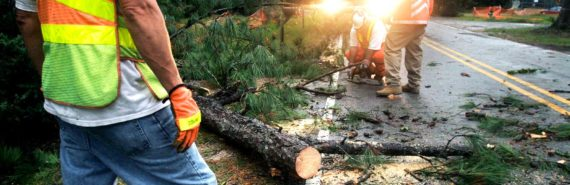 tree removal service (tree care workers)