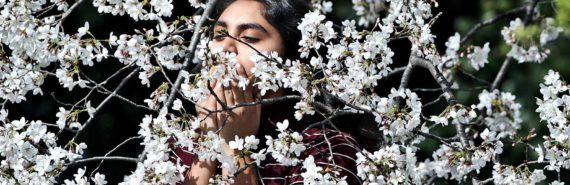 woman smelling cherry blossom trees
