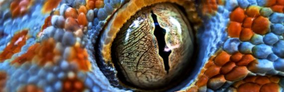 gecko eyeball - silurian hypothesis concept