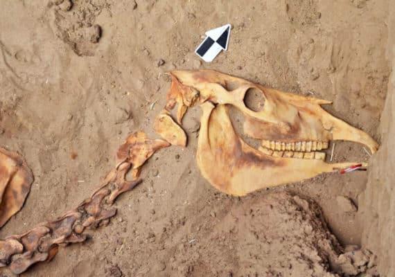 horse burial - head