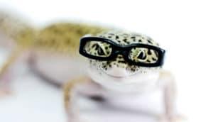 lizard wearing glasses
