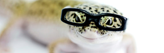 lizard wearing glasses