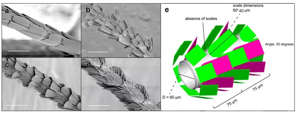 moth antennae scales