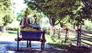 plain community horse cart