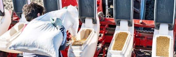 soybean seeds farming