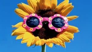 sunflower with sunglasses