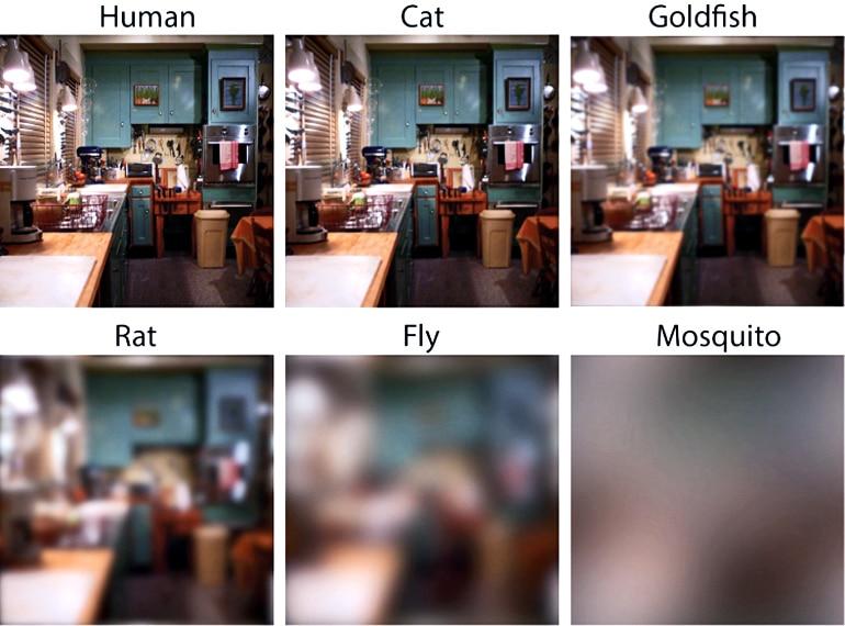 visual acuity comparison