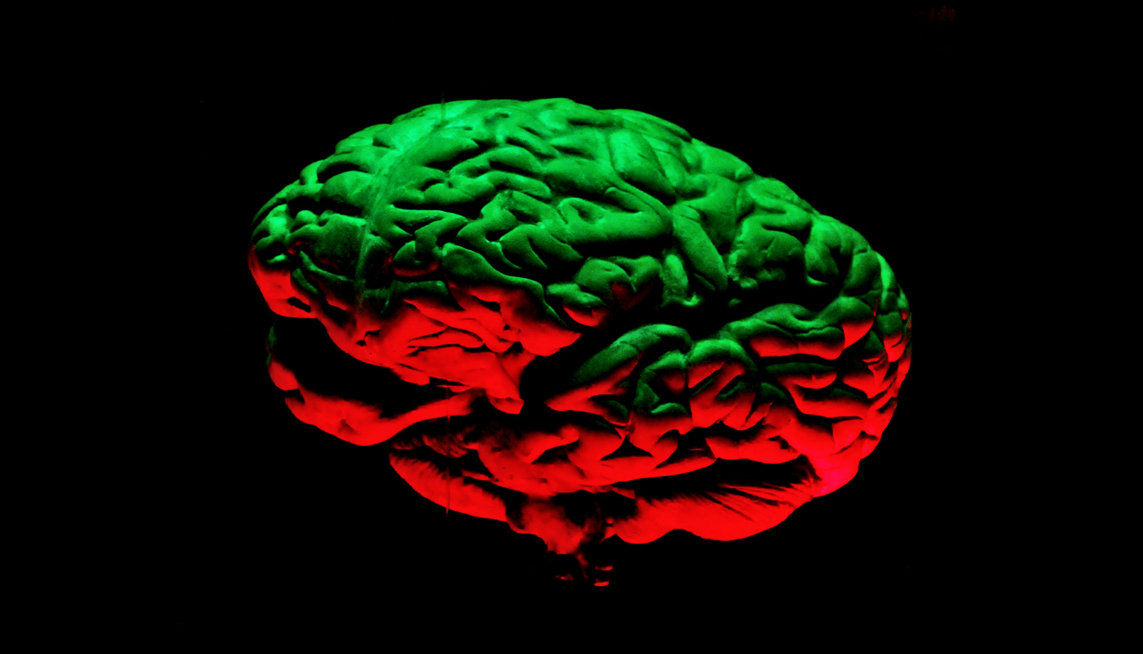 Gel regrows mouse neurons after brain-damaging strokes