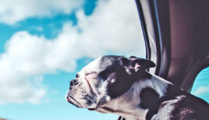 dog looking out car window (memory concept)