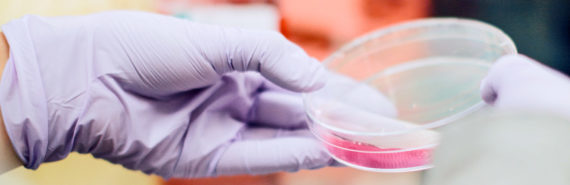 petri dish in purple gloved hand