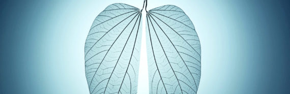leaves lung transplant concept
