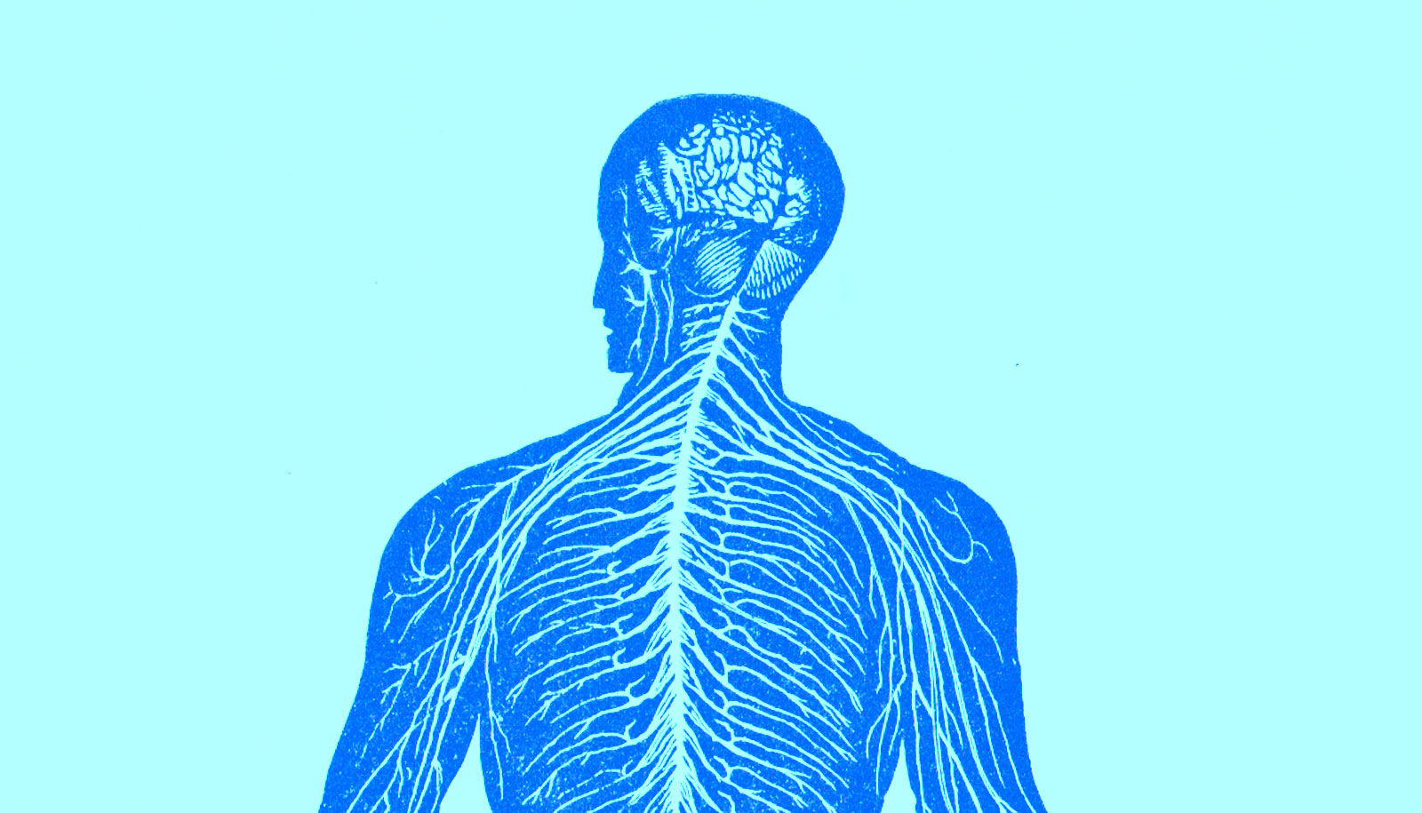 embryonic stem cells form useful proto-nervous system