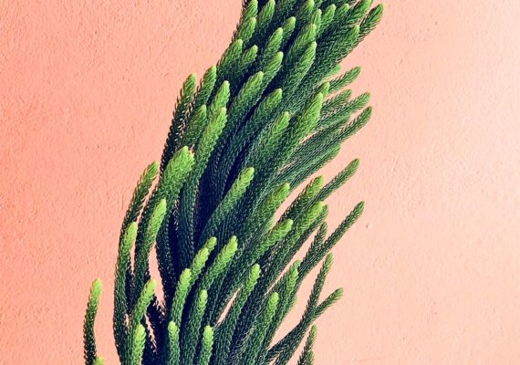 plant against pink wall